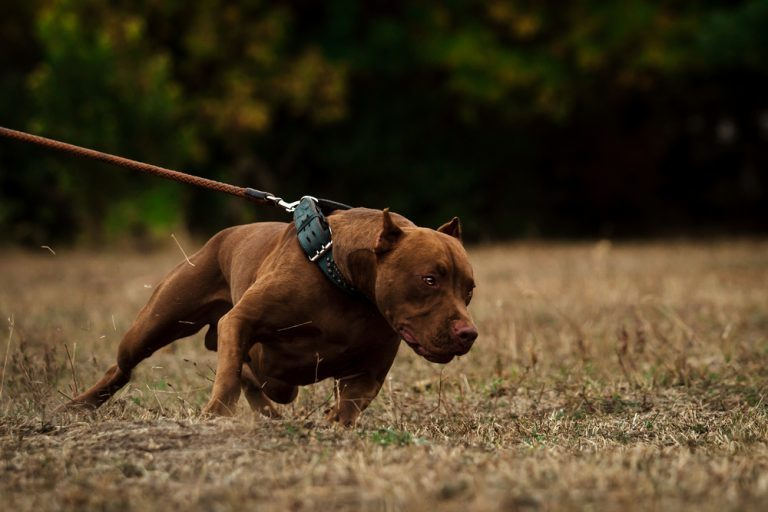 Top most dangerous dogs in the world